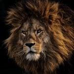 Animales en peligro de extinción debido al cambio climático