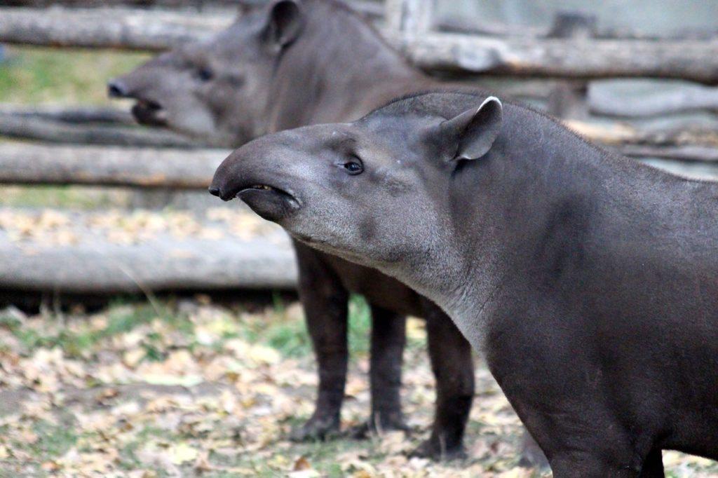 animales en peligro de extinción en colombia