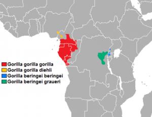 Hábitat Gorila