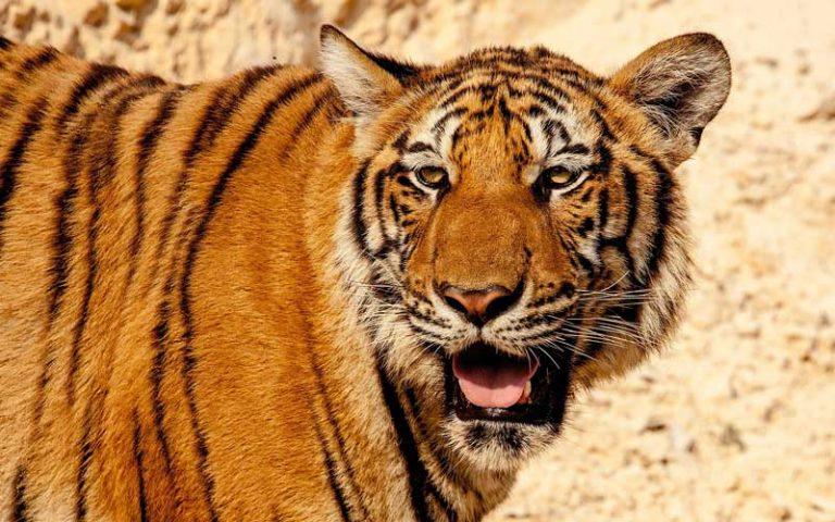 mamíferos en peligro de extinción