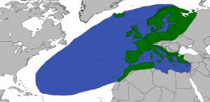 Distribución anguila