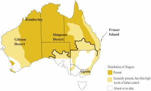 habitat dingo