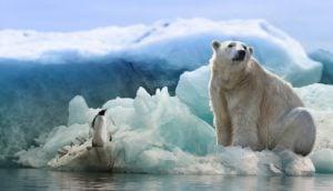 oso polar cambio climático