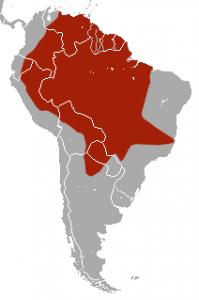 hábitat distribución armadillo gigante