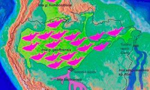 distribución hábitat delfín rosado