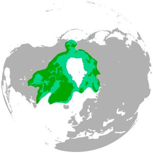 Oso polar distribución