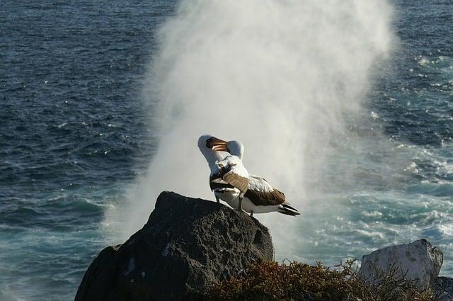 albatros en peligro ecuador
