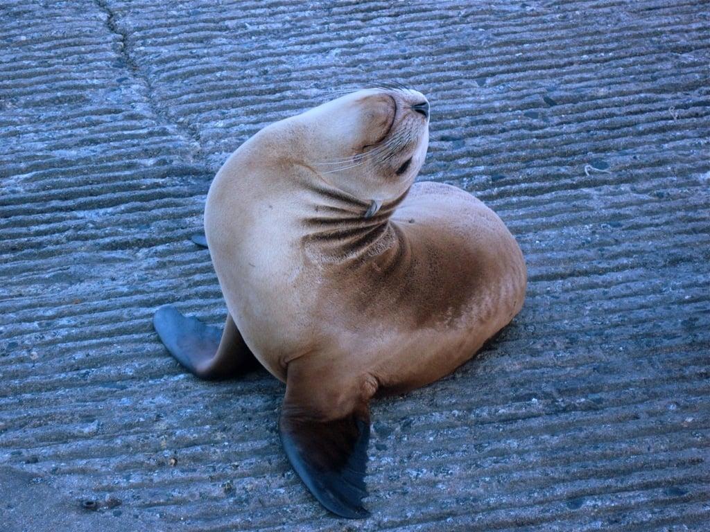 gato del mar