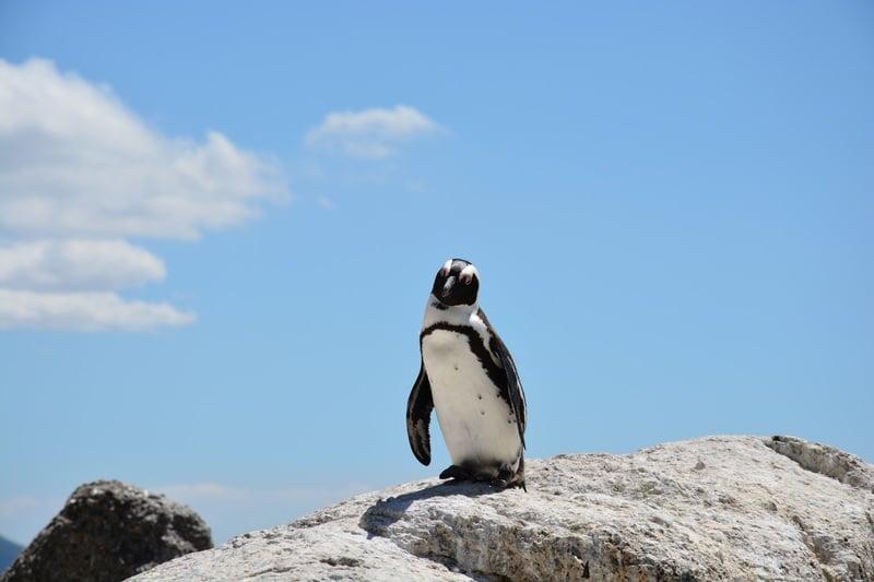 animales en peligro de extinción en Chile