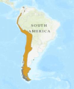 hábitat del cóndor andino