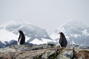 pingüinos en peligro de extinción