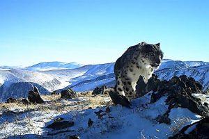 montañas leopardo habitat